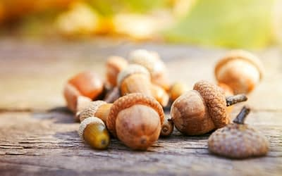 Acorns has an affiliate program that pays a flat fee per referral that you send through your special link.
