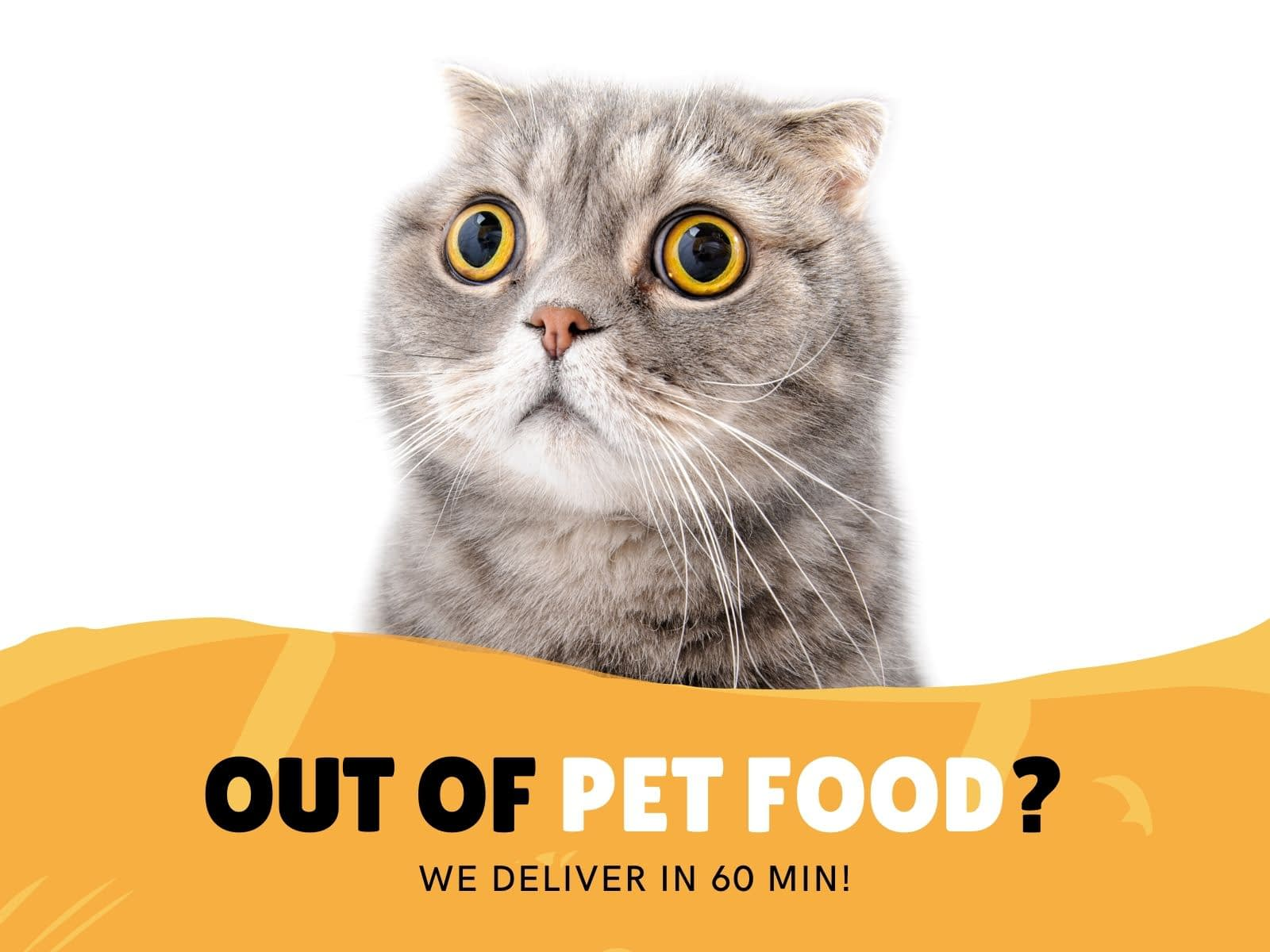 Cat with yellow eyes looks surprised and banner reads out of pet food? We deliver in 60 minutes