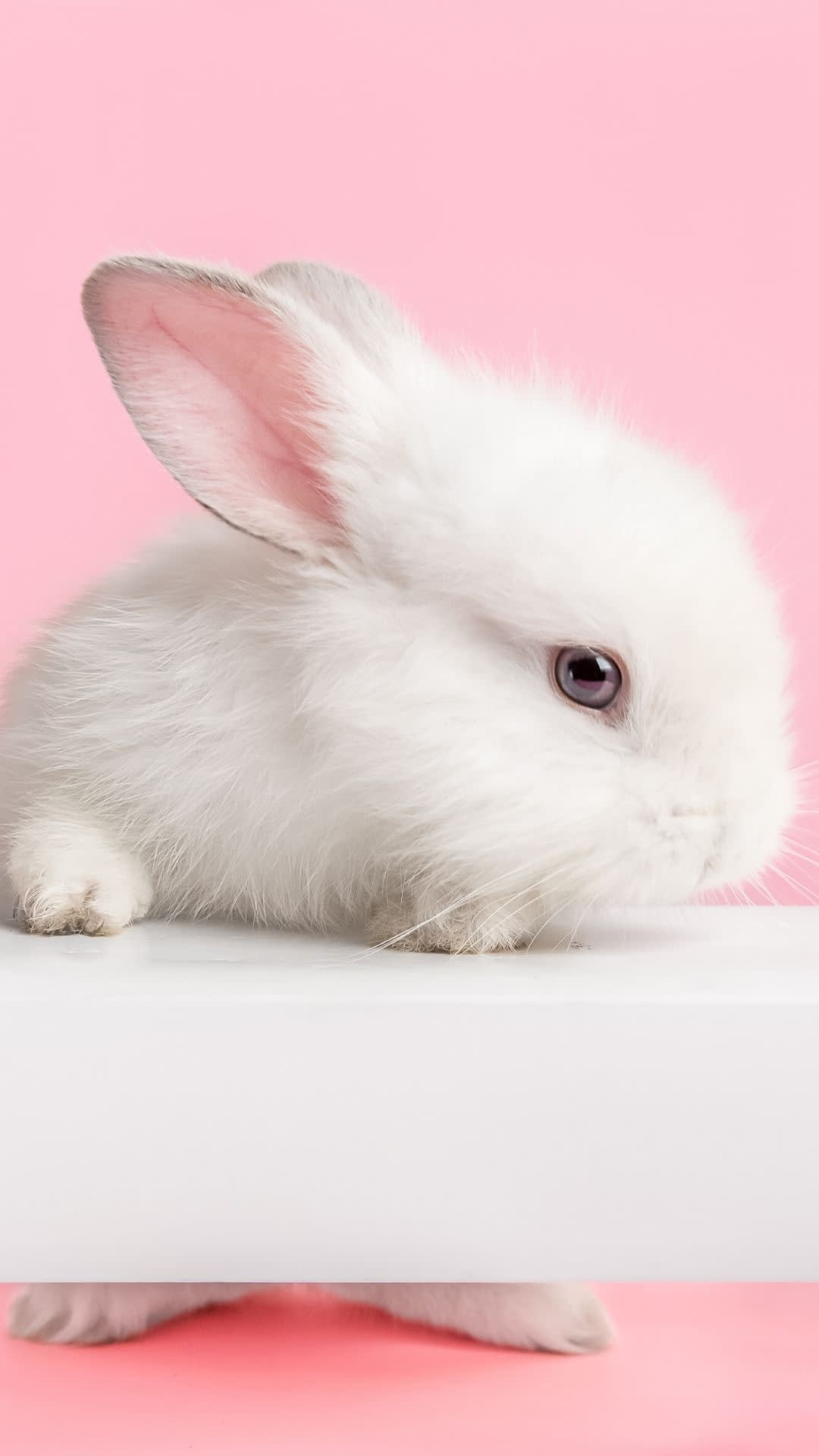 Wanting some cute bunny wallpaper backgrounds for your iPhone? Here, you can Save each wallpaper as a pin on Pinterest to use later. To save a wallpaper on your iPhone, tap and hold the photo you like and save it to your photos.
