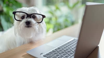 dog is wearing glasses and is sitting at the computer