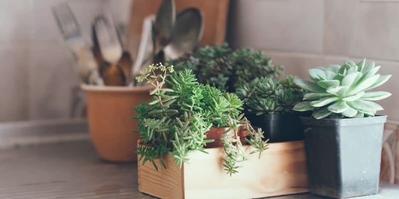 Succulent Gift Boxes and Subscription Boxes