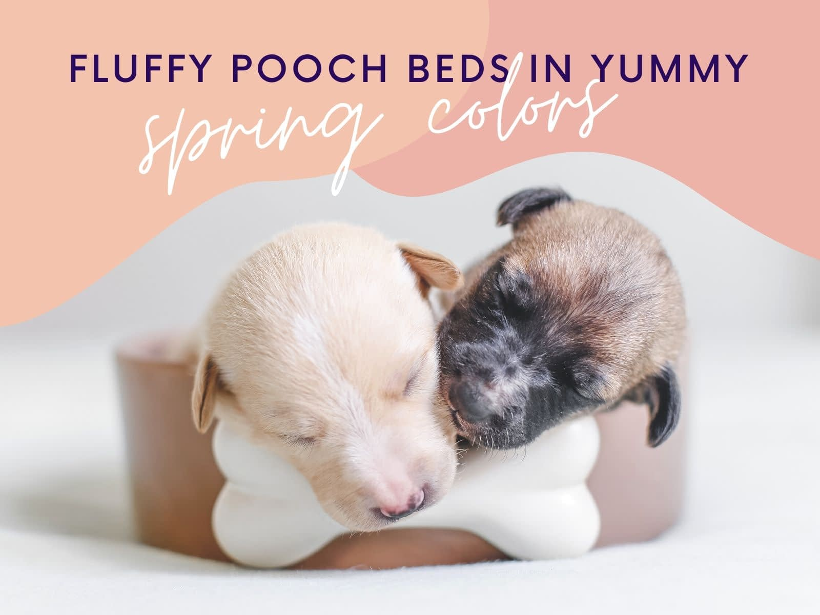 Two puppies asleep with a bone with Fluffy Pooch Beds in Yummy Spring Colors Facebook Shop Cover
