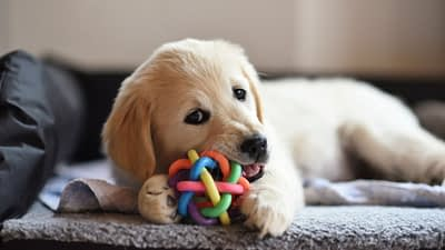 Make money online by promoting these top Dog Toy Affiliate Programs. Once you are approved, you'll receive marketing assets, and special links that you can use to refer customers through blogs, social media, video, and other approved marketing strategies.